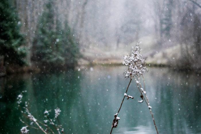 Снегопад Начинающий фотограф, Снегопад, Первый снег, Киров, Дендрарий, Nikon d3300, Длиннопост