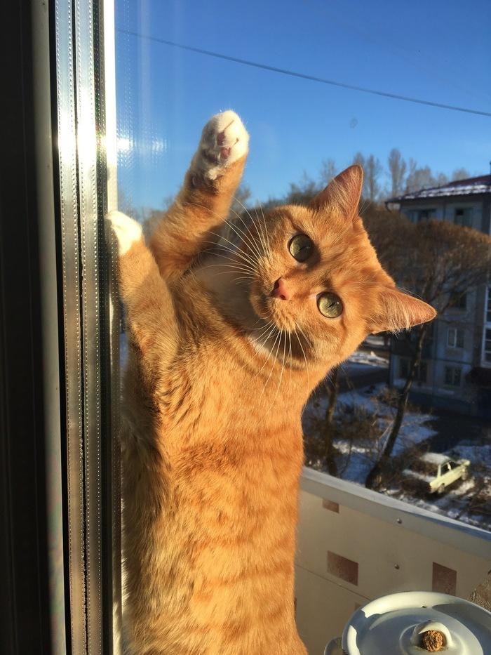 Кот, диван и квартирный вопрос Кот, Диван, Антицарапки, Нужен совет, Длиннопост