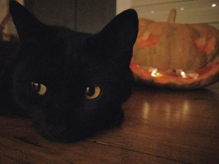 Котосессия Кот, Животные, Тыква, Тыква на хэллоуин, Черный кот, Длиннопост