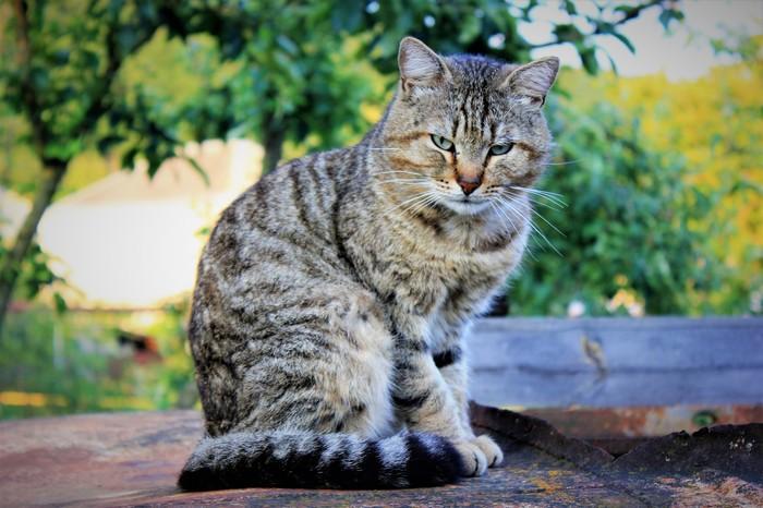 Портрет кота по имени Т.. Котомафия, Кот