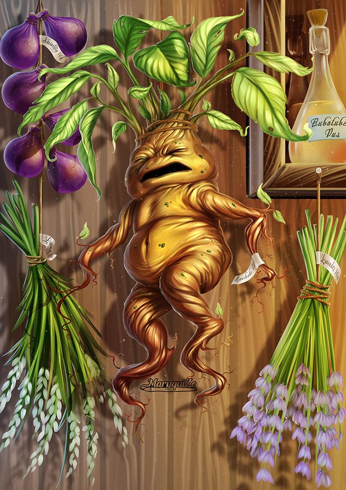 Мандрагора Мандрагора, Гарри Поттер, Ботаническая иллюстрация, Цифровой рисунок, Фан-Арт, 2D, Видео