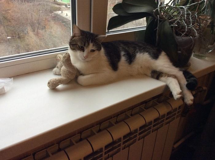 Грустный котя Кот, Грусть, Осень