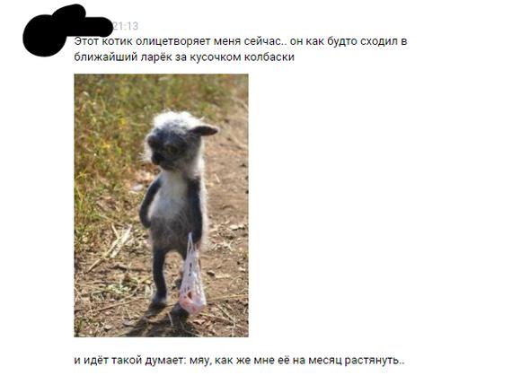 В России даже коты страдают...