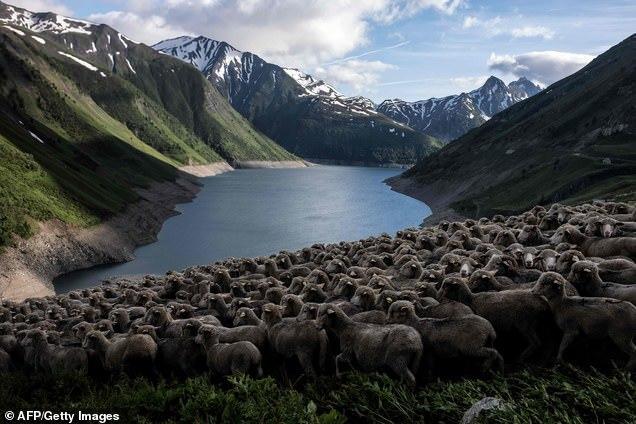 Из жизни пастуха Пастух, Природа, Альпы, Горы, Овцы, Красота, Фотография, Длиннопост