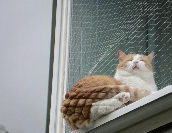 Чужие котики Кот, Чужой, Сходство
