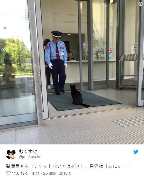 В Россию пригласили двух японских котов, которых не пускают в местные музеи Общество, Япония, Животные, Кот, Музей, Россия, Зеленоградск, РИА Новости, Видео, Длиннопост