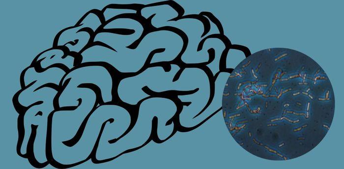 Микробы колонизировали не только наше тело, но и наш мозг? Микробиом, Микроорганизмы, Бактерии, Мозг, Длиннопост