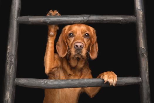 Полезу за котом Собака, Лестница, Фотография