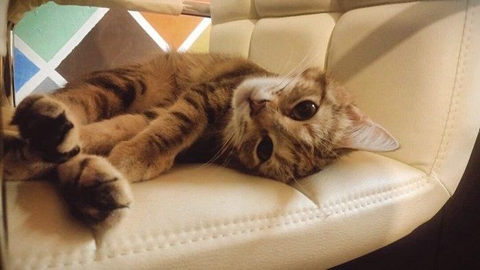 """""""Вали уже на работу, спать мешаешь! Кот, Котомафия, Сон, А на улице дубак, И ты так с завистью, И слезами, Работа"""