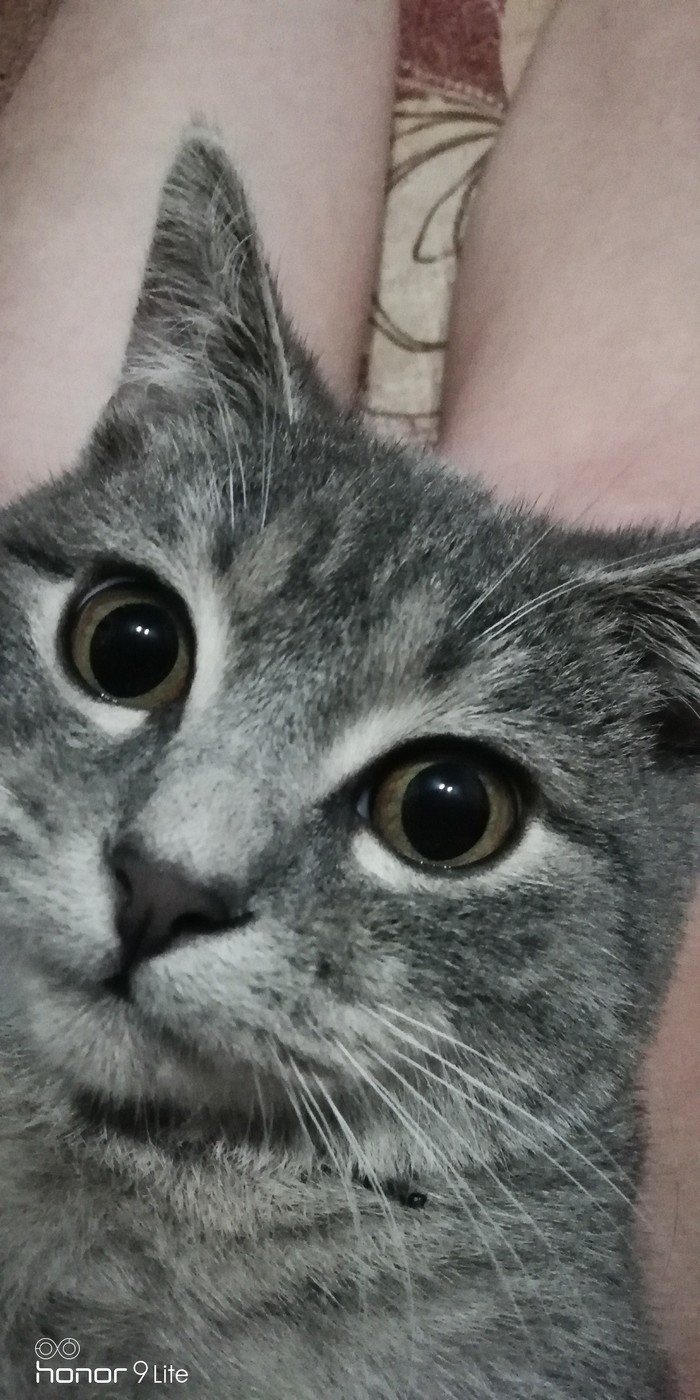 Не понимаю чего хотят от меня эти два подписчика, но... Кот, Котомафия, Сфинкс, Британский кот, Длиннопост