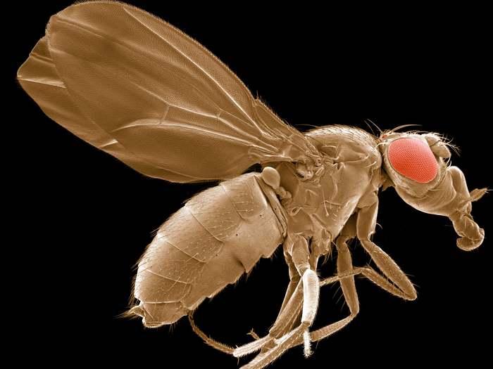 Удивительные фотографии полученные с помощью микроскопа Наука, Микроскоп, Познавательно, Интересное, Длиннопост