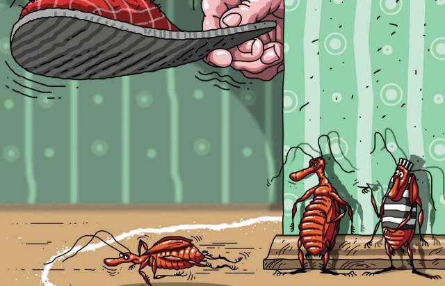 Частые ошибки в борьбе с тараканами и клопами или у дезинфектора накипело... Клопы, Тараканы, Дезинсекция, Совет, Длиннопост