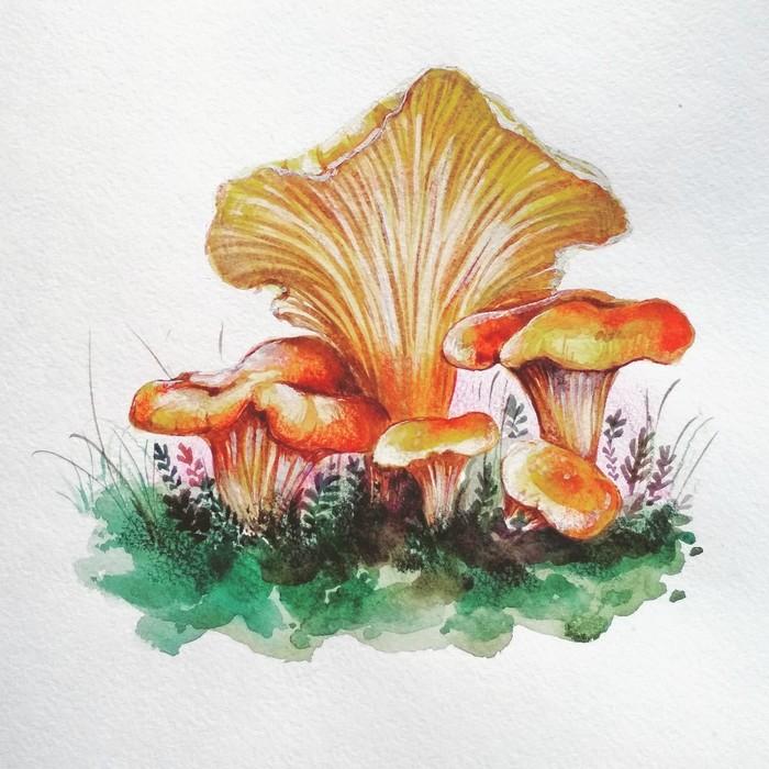 Почти ботанические иллюстрации Грибы, Лишайник, Колокольчики, Жимолость, Рисунок, Живопись, Ботаническая иллюстрация, Акварель, Длиннопост