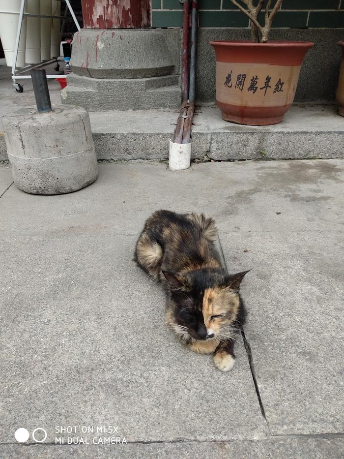 Инь-ян кот при буддийском храме в Гуанчжоу Кот, Буддийский храм, Китай, Длиннопост