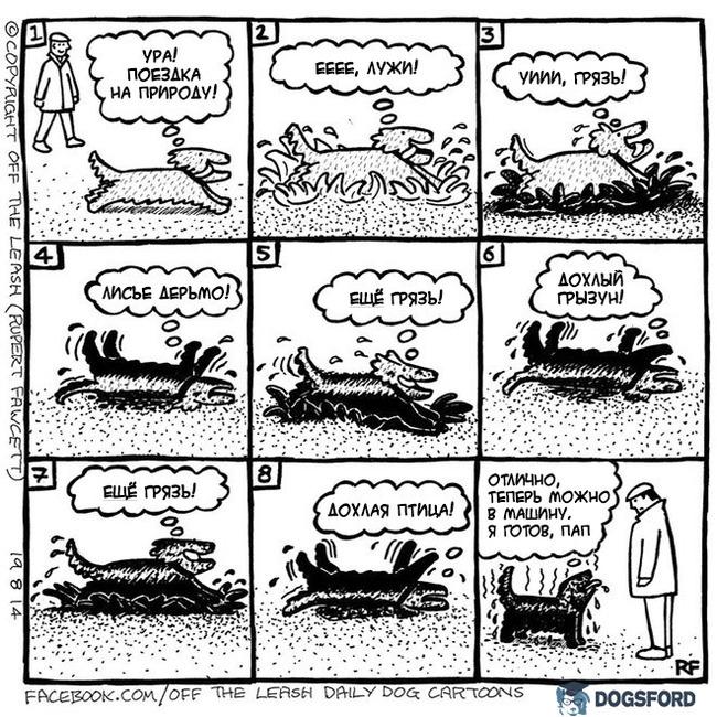 О прогулках с собаками Комиксы, Собака, Прогулка