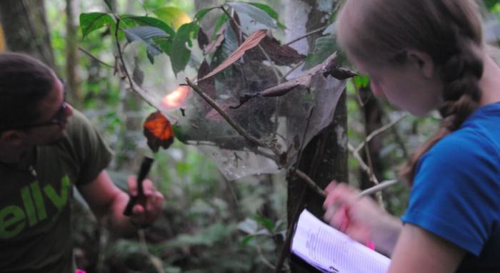 Учёные обнаружили в Амазонии новый вид ос, которые превращают пауков в«зомби» TJournal, Наука, Насекомые, Осы-Убийцы, Паук, Зомби