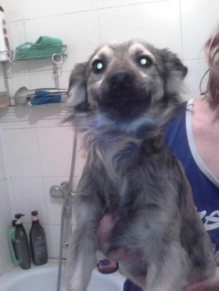 Кто потерял щенка, Краснодар? Найдена собака, Ищу хозяина, Краснодар, Длиннопост, Собака, Без рейтинга