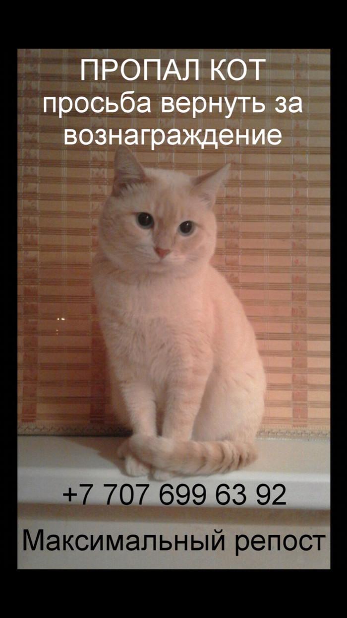 Пропал кот Без рейтинга, Кот, Пропал, Длиннопост, Актау, Казахстан