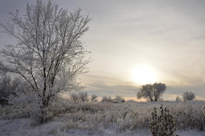 Иней Фотография, Зима, Пейзаж, Иней, Nikon d5200, Саратов