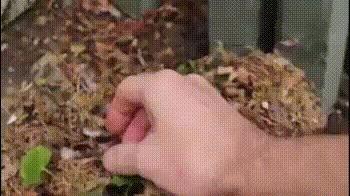 Из крохотного яичка до взрослой птички