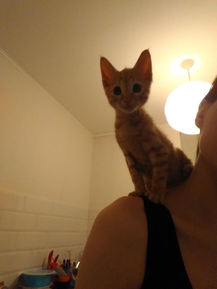 Счастье вдруг... Кот, Найденыш, Длиннопост