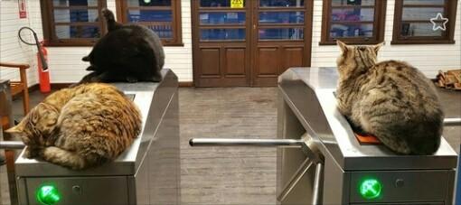 Охранная система CAT