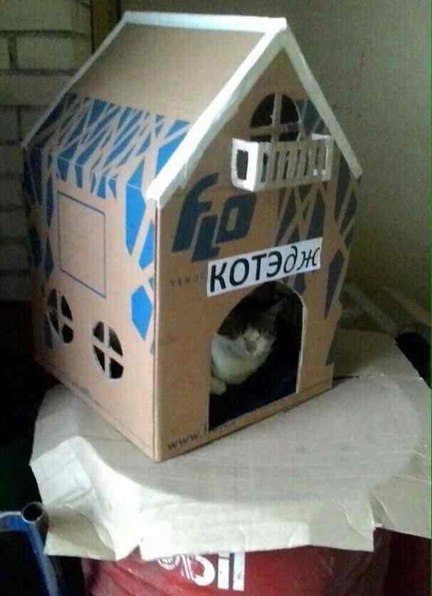 Словарь заимствованных слов =) Кот, Смешное, Картинки