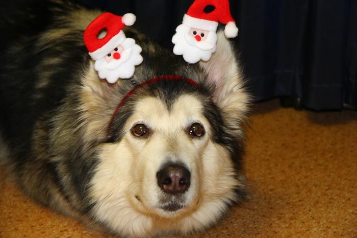 Когда сказали, что Дед Мороза не существует