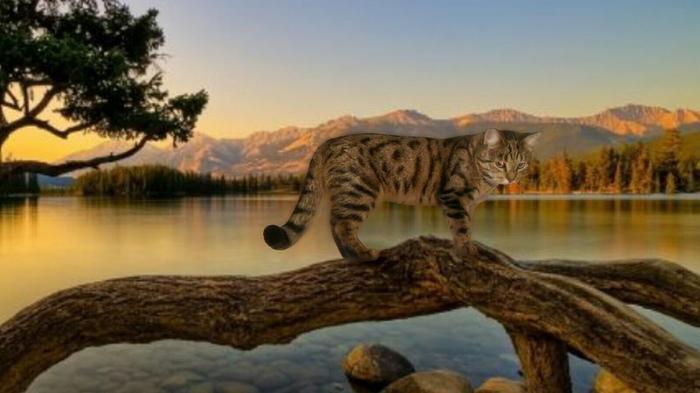 9 веских причин любить кота Кот, Веские причины любить кота, Девять причин, Длиннопост
