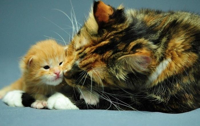Милые котейки...