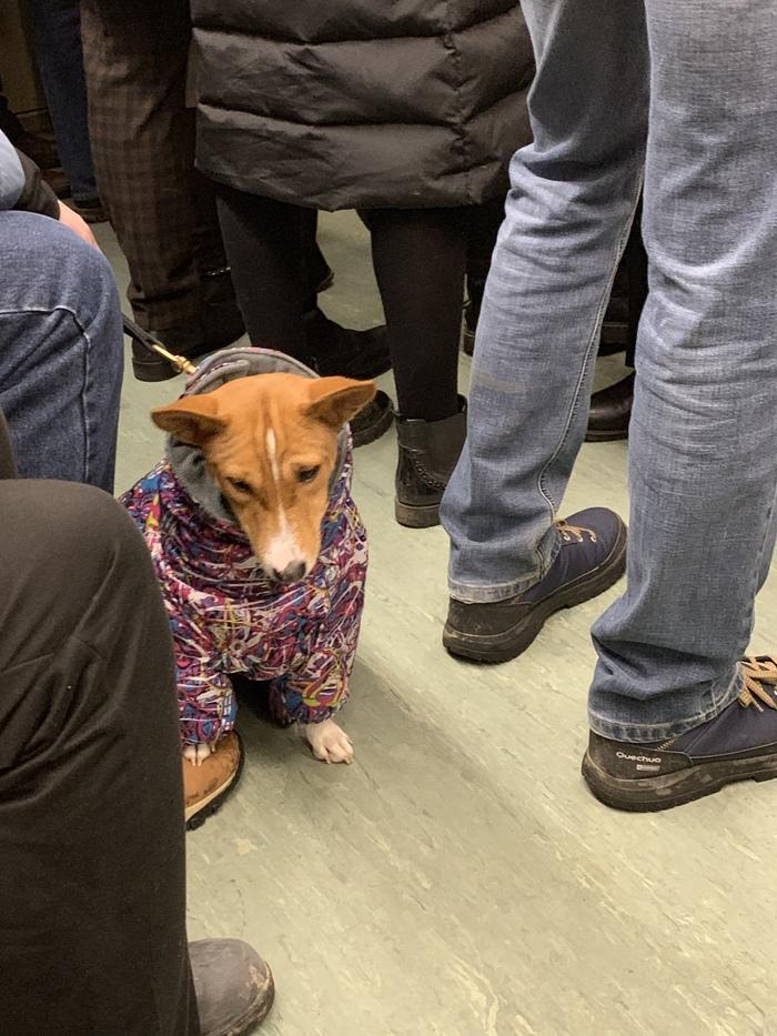 Даже пёс не хочет работать сегодня Собака, Метро, Пятница, Новый Год