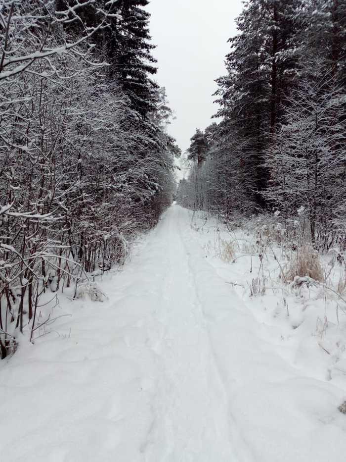 Новогодний лес