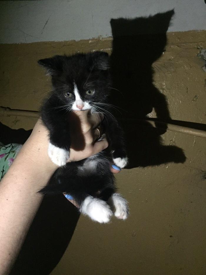 Пикабу, прошу помощи! Кот, Котята, Сила Пикабу, Без рейтинга, Длиннопост, Помощь животным, В добрые руки, Рязань