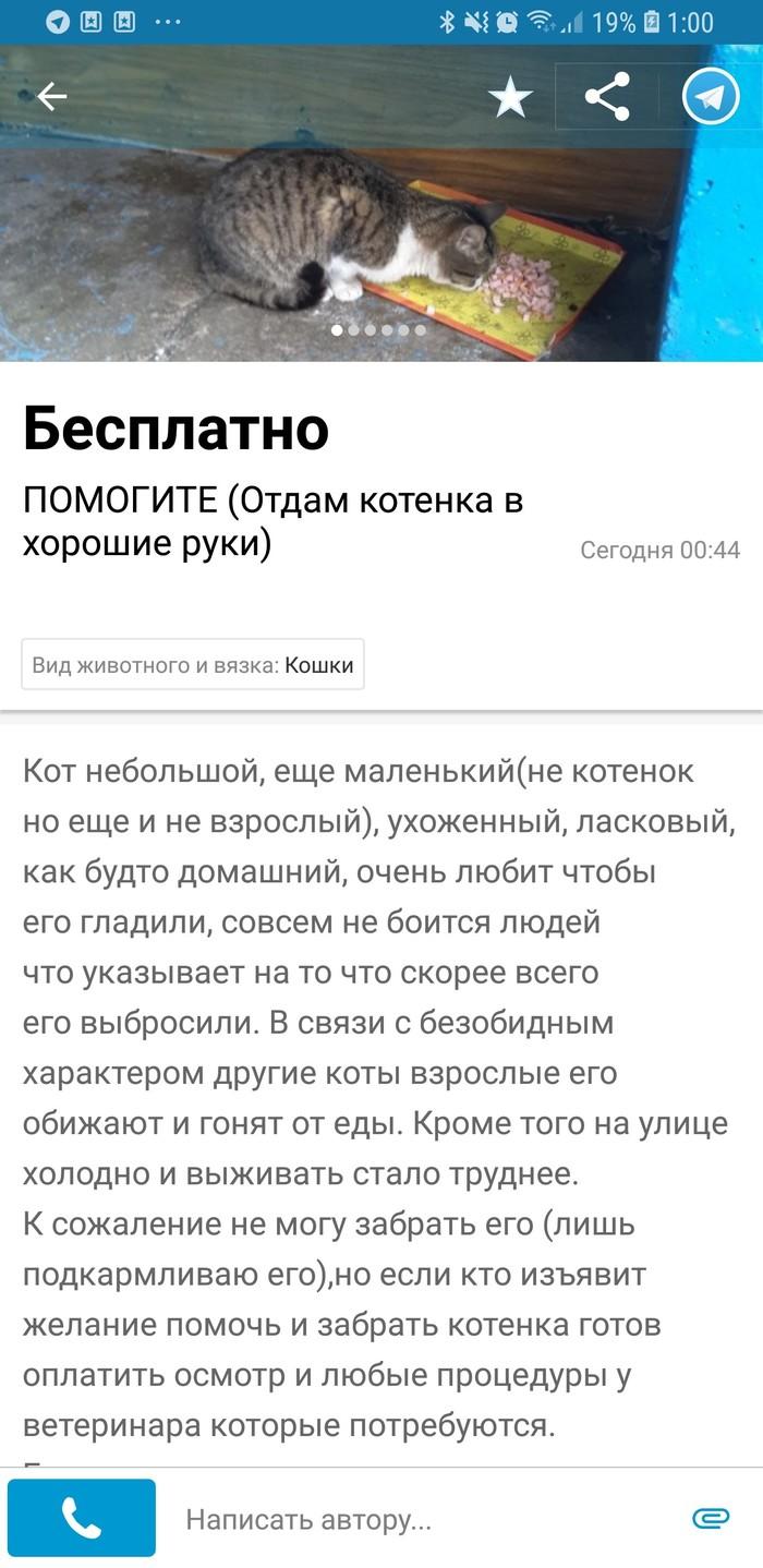 Давайте быть как Никита... Добро, Кот, Харьков, Спасение животных, Без рейтинга