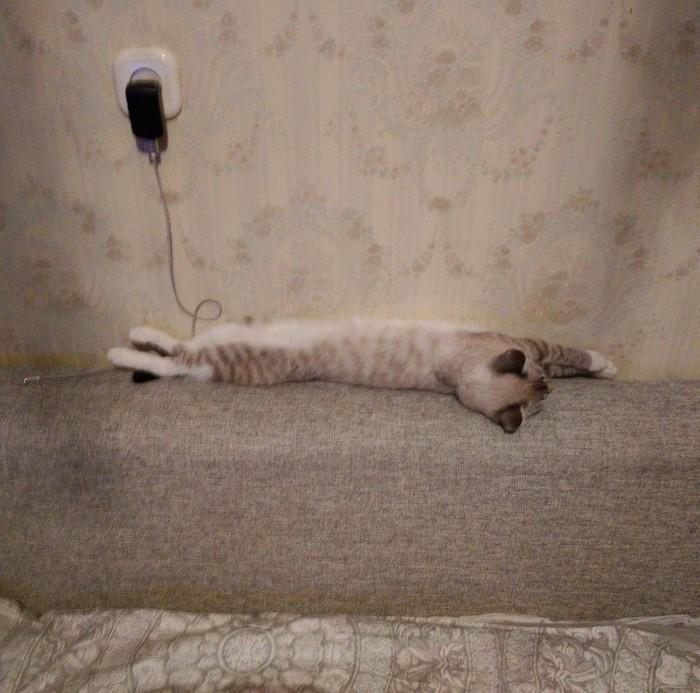 Кошка на подзарядке Кот, Зарядка, Телефон, Котомафия, Отдых, Сон