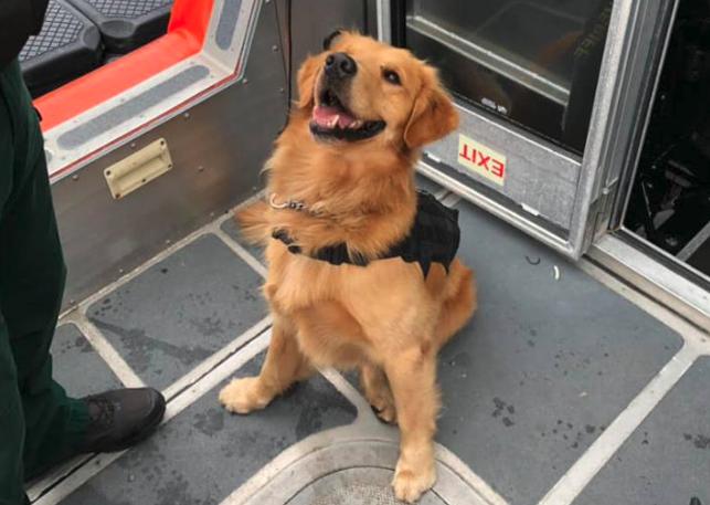 Служебная собака, проверяющая пассажиров круизного лайнера во Флориде, получила передозировку наркотиками Новости, США, Круизные лайнеры, Фестиваль, Животные, Собака, Наркотики, Длиннопост
