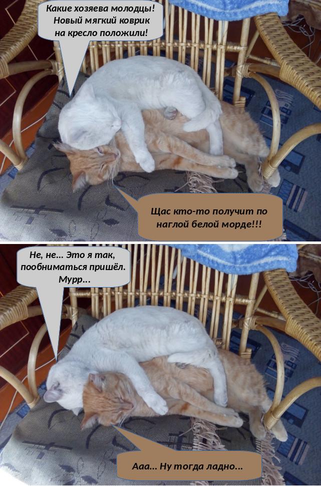 Два кота...