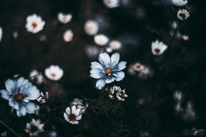Атмосферы пост #7 Фотография, ВКонтакте, Природа, Цветы, Искусство, Гелиос, Длиннопост