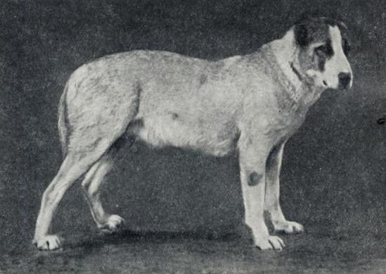 О породах собак №85. Среднеазиатская овчарка. Собака, Породы собак, Алабай, Средне-Азиатская овчарка, Длиннопост