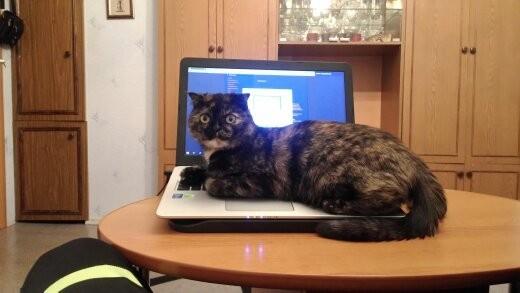 На волне постов было, стало. Трехцветная кошка, Домашние животные, Было-Стало, Длиннопост