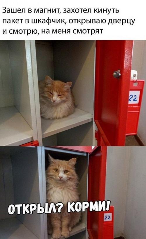 Кот в Магните