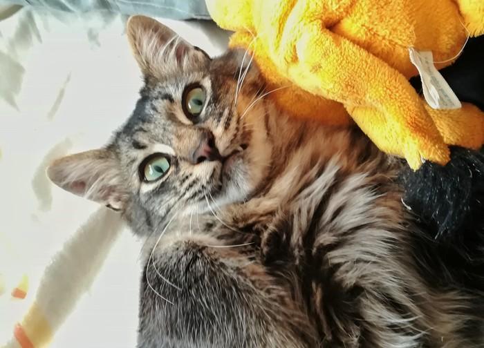 Видал? Ты следующий Кот, Кусь, Игрушка для кота, Морда