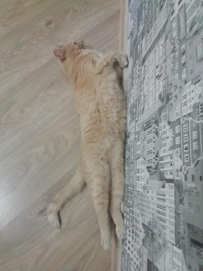 Жилплощадь для кота. Квартирный вопрос, Пространство для жизни