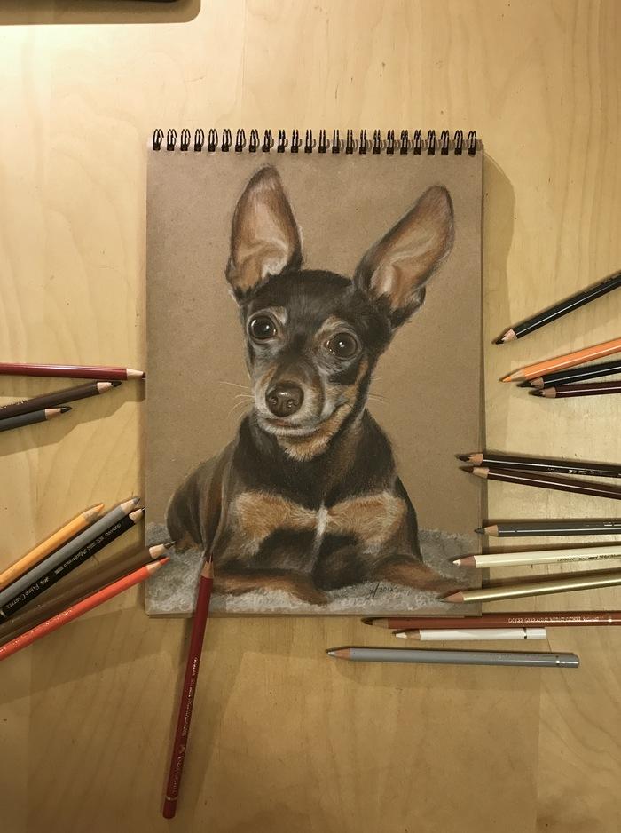 Собакен карандашами