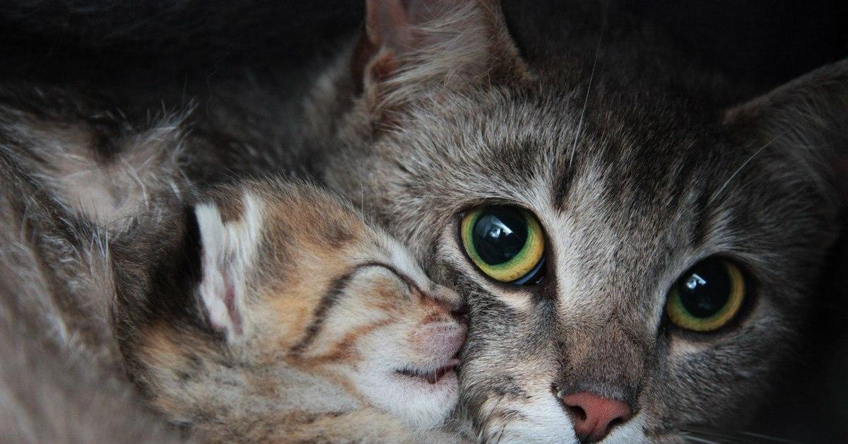 Картинки котенка и мамы
