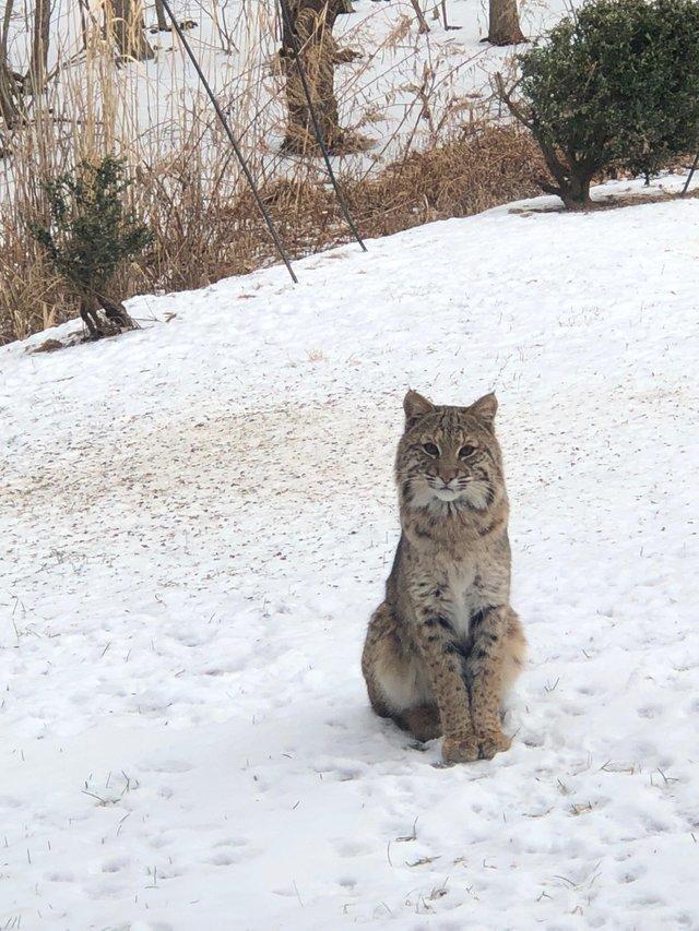 Вот кого я встретил сегодня утром на заднем дворе