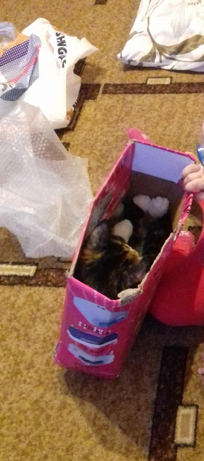Моника. Кот, Коробка и кот, Длиннопост