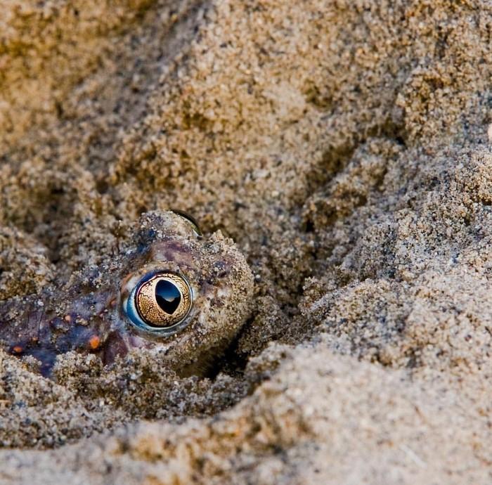 Я слежу за тобой... Лягушка, Дикий мир, Земноводные, Длиннопост, Животные