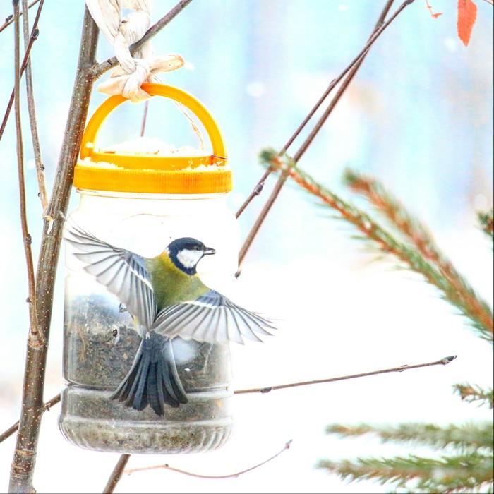 Один день из жизни уральской кормушки. Птицы, Зима, Фотография, Новичок, Длиннопост