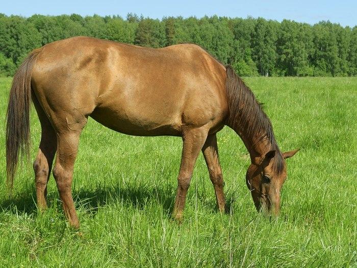 Новогоднее чудо в конюшне. Как назвать малышку? Лошадь, Жеребенок, Животные, Милота, Пушистое мимими, Конюшня, Приют, Видео, Длиннопост